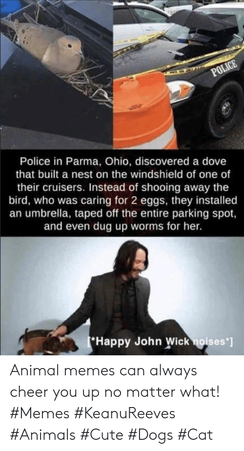 Animals, Cute, and Dogs: POLICE  Police in Parma, Ohio, discovered a dove  that built a nest on the windshield of one of  their cruisers. Instead of shooing away the  bird, who was caring for 2 eggs, they installed  an umbrella, taped off the entire parking spot,  and even dug up worms for her.  Happy John Wick noises ] Animal memes can always cheer you up no matter what! #Memes #KeanuReeves #Animals #Cute #Dogs #Cat