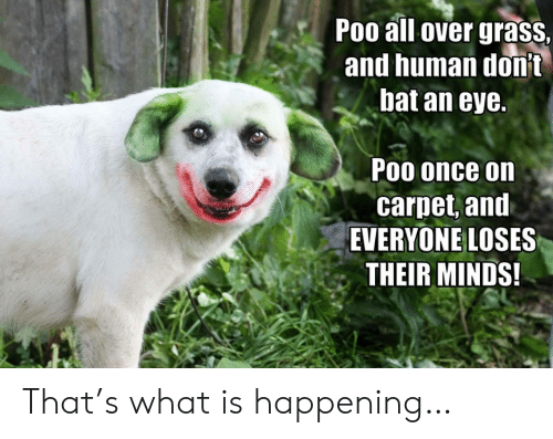 poo: Poo all over grass  and human donit  bat an eye.  Poo once on  carpet, and  EVERYONE LOSES  THEIR MINDS! That's what is happening…