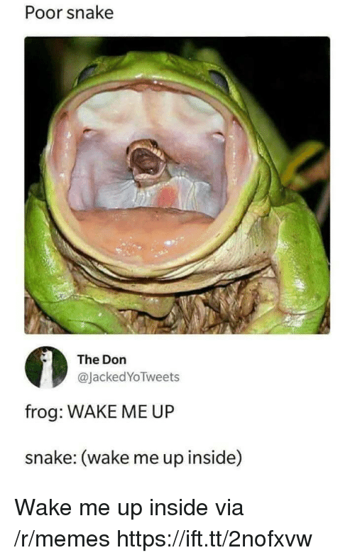 Memes, Snake, and The Don: Poor snake  The Don  @JackedYoTweets  frog: WAKE ME UP  snake: (wake me up inside) Wake me up inside via /r/memes https://ift.tt/2nofxvw