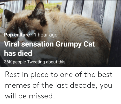 Memes, Pop, and Grumpy Cat: Pop culture 1 hour ago  Viral sensation Grumpy Cat  has died  36K people Tweeting about this Rest in piece to one of the best memes of the last decade, you will be missed.