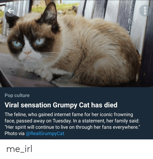 "Family, Internet, and Pop: Pop culture  Viral sensation Grumpy Cat has died  The feline, who gained internet fame for her iconic frowning  face, passed away on Tuesday. In a statement, her family said:  ""Her spirit will continue to live on through her fans everywhere.  Photo via @RealGrumpyCat me_irl"