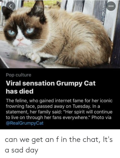 "Family, Internet, and Pop: Pop culture  Viral sensation Grumpy Cat  has died  The feline, who gained internet fame for her iconic  frowning face, passed away on Tuesday. In a  statement, her family said: ""Her spirit will continue  to live on through her fans everywhere."" Photo via  @RealGrumpyCat can we get an f in the chat, It's a sad day"