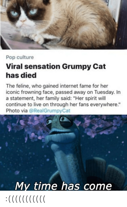 "Family, Internet, and Pop: Pop culture  Viral sensation Grumpy Cat  has died  The feline, who gained internet fame for her  iconic frowning face, passed away on Tuesday. In  a statement, her family said: ""Her spirit will  continue to live on through her fans everywhere.""  Photo via @RealGrumpyCat  My time has come :((((((((((("