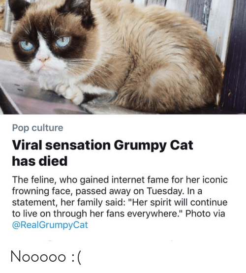 "Family, Internet, and Pop: Pop culture  Viral sensation Grumpy Cat  has died  The feline, who gained internet fame for her iconic  frowning face, passed away on Tuesday. In a  statement, her family said: ""Her spirit will continue  to live on through her fans everywhere."" Photo via  @RealGrumpyCat Nooooo :("