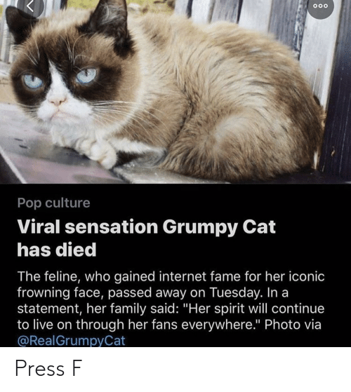"Family, Internet, and Pop: Pop culture  Viral sensation Grumpy Cat  has died  The feline, who gained internet fame for her iconic  frowning face, passed away on Tuesday. In a  statement, her family said: ""Her spirit will continue  to live on through her fans everywhere."" Photo via  @RealGrumpyCat Press F"