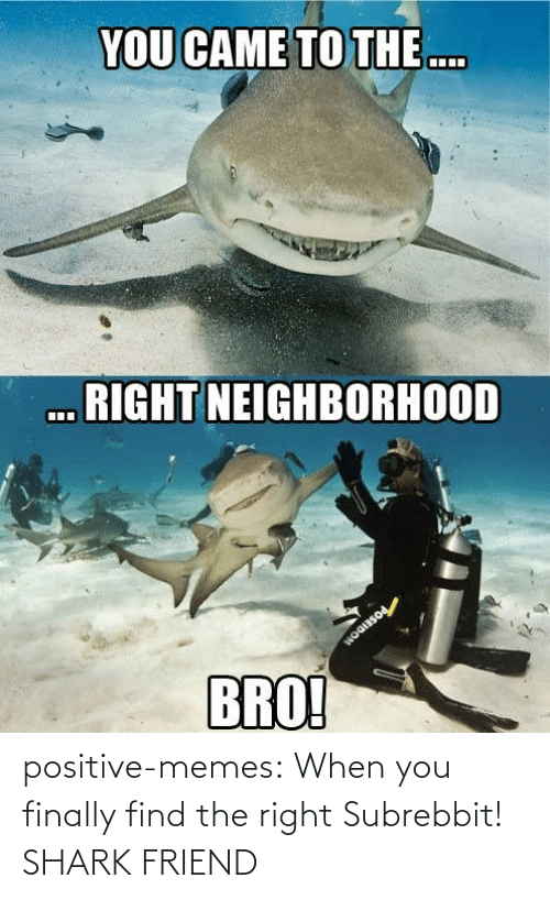 find: positive-memes:  When you finally find the right Subrebbit!  SHARK FRIEND