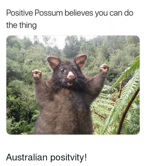 Possum, Australian, and The Thing: Positive Possum believes you can do  the thing <p>Australian positvity!</p>
