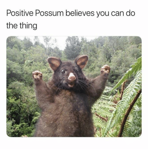 Possum, The Thing, and Can: Positive Possum believes you can do  the thing