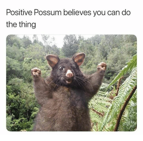 Possum, Humans of Tumblr, and The Thing: Positive Possum believes you can do  the thing