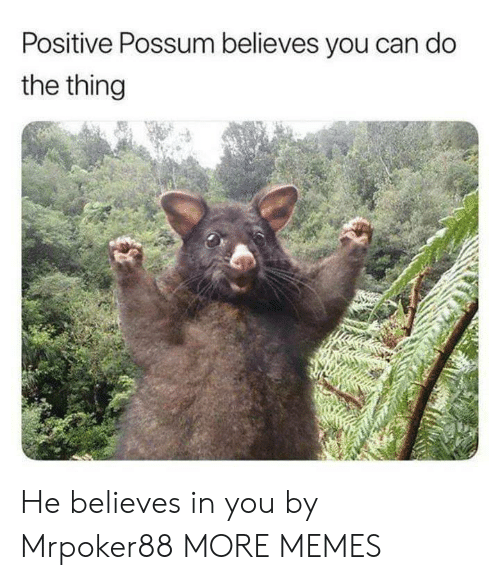 Dank, Memes, and Target: Positive Possum believes you can do  the thing He believes in you by Mrpoker88 MORE MEMES