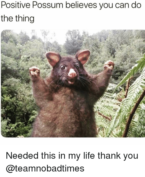 Funny, Life, and Thank You: Positive Possum believes you can do  the thing Needed this in my life thank you @teamnobadtimes