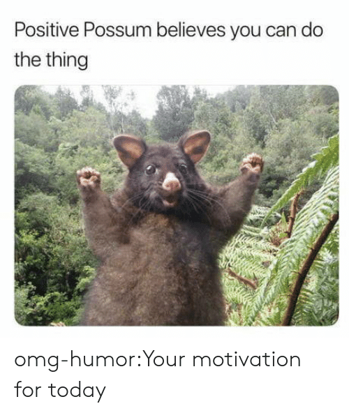 Omg, Tumblr, and Blog: Positive Possum believes you can do  the thing omg-humor:Your motivation for today