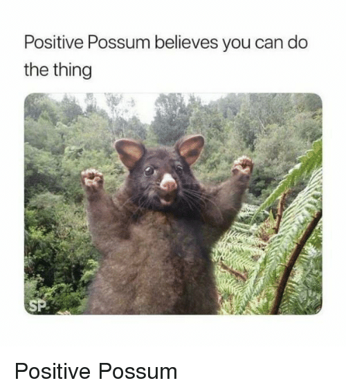Possum, The Thing, and Can: Positive Possum believes you can do  the thing  SP <p>Positive Possum</p>