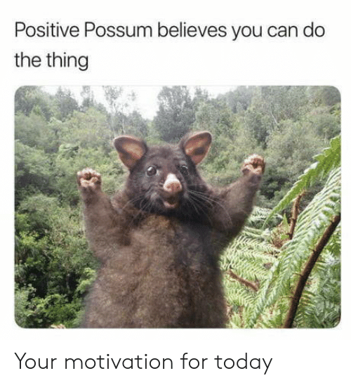 Possum, Today, and The Thing: Positive Possum believes you can do  the thing Your motivation for today