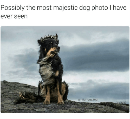 Majesticity: Possibly the most majestic dog photo have  ever seen  @hilarious ted