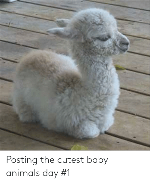 Baby Animals: Posting the cutest baby animals day #1