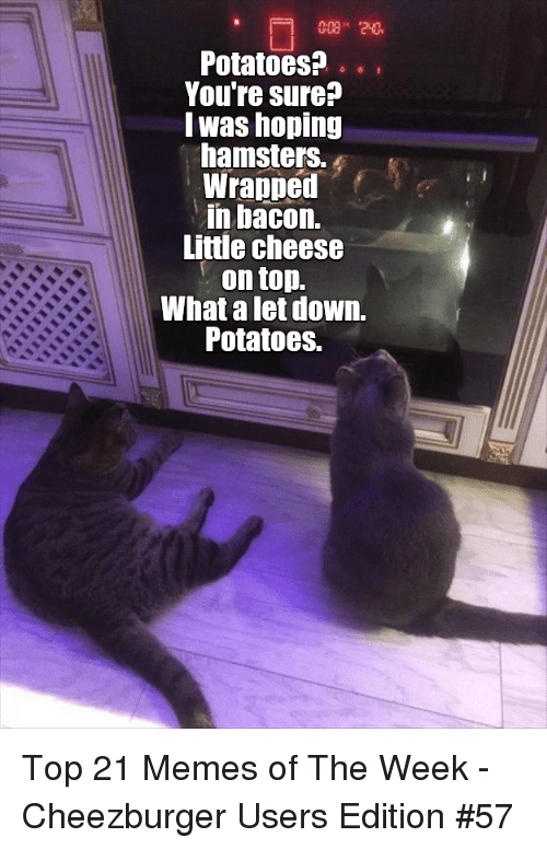 21 Memes: Potatoes?.  Youre sure?  lwas hoping  hamsters.  Wrapped  in bacon.  Little cheese  . on top.  What a let down.  Potatoes. Top 21 Memes of The Week - Cheezburger Users Edition #57