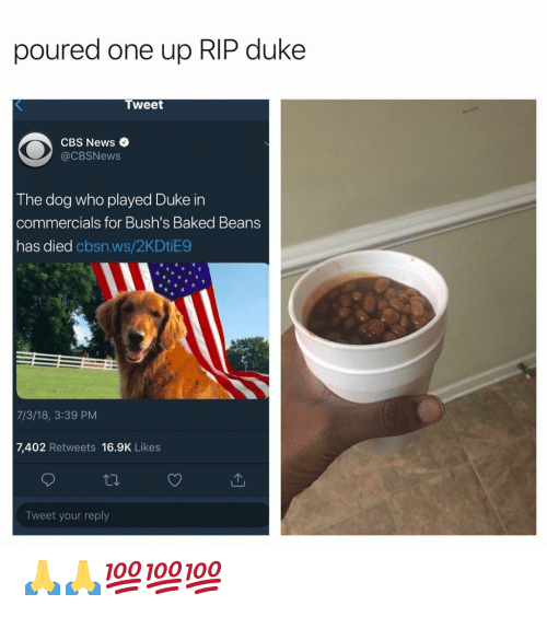 baked beans: poured one up RIP duke  Tweet  CBS News  @CBSNews  The dog who played Duke in  commercials for Bush's Baked Beans  has died cbsn.ws/2KDtiE9  7/3/18, 3:39 PM  7,402 Retweets 16.9K Likes  Tweet your reply 🙏🙏💯💯💯