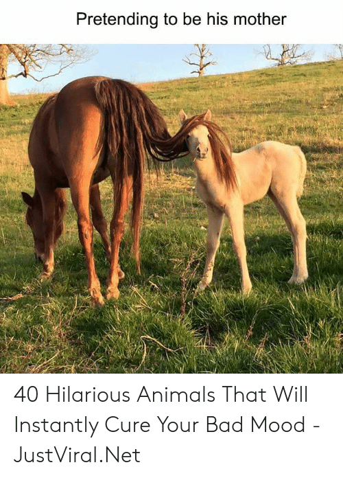 Animals, Bad, and Mood: Pretending to be his mother 40 Hilarious Animals That Will Instantly Cure Your Bad Mood - JustViral.Net