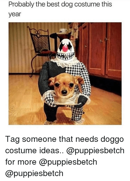 Memes, Best, and Tag Someone: Probably the best dog costume this  year Tag someone that needs doggo costume ideas.. @puppiesbetch for more @puppiesbetch @puppiesbetch