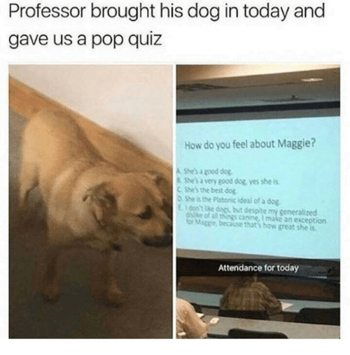 sse: Professor brought his dog in today and  gave us a pop quiz  How do you feel about Maggie?  A She's a good dog  shes a very good dog yes she is  C She's the best dog.  D. She is the Platonic ideal of a dog  E Idontlike dops, but despite my generalized  sse of a things canine, I make an exception  Maggie because that's how great she s  Attendance for today