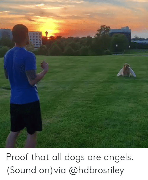 Dogs, Instagram, and Target: Proof that all dogs are angels. (Sound on)via @hdbrosriley