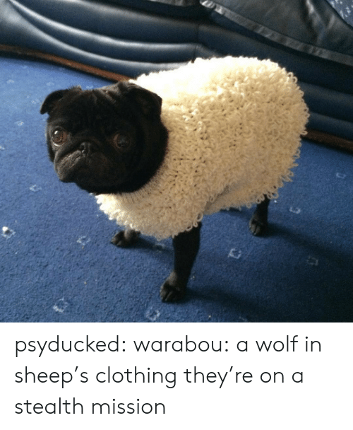 Tumblr, Blog, and Http: psyducked:  warabou:  a wolf in sheep's clothing  they're on a stealth mission