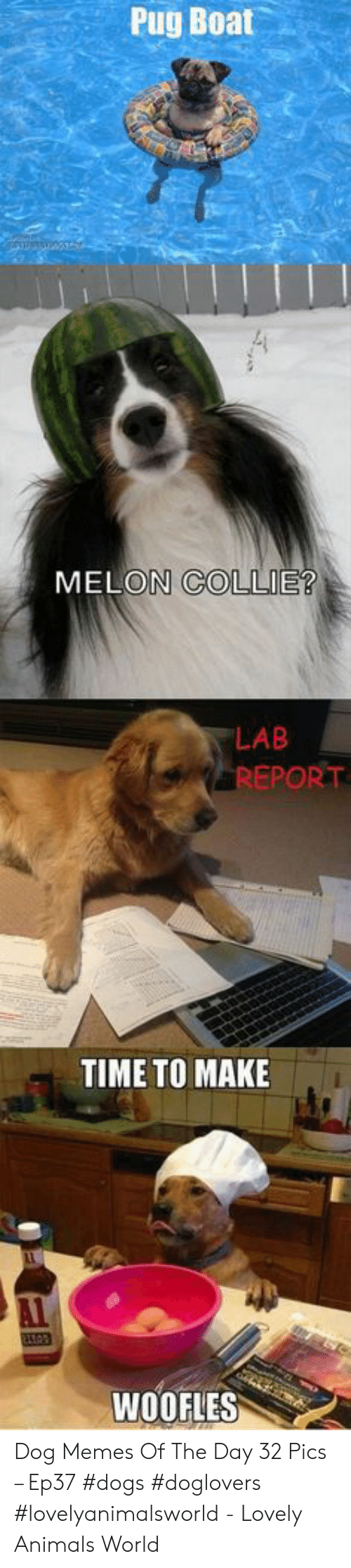 collie: Pug Boat  MELON COLLIE?  LAB  REPORT  TIME TO MAKE  WOOFLES Dog Memes Of The Day 32 Pics – Ep37 #dogs #doglovers #lovelyanimalsworld - Lovely Animals World