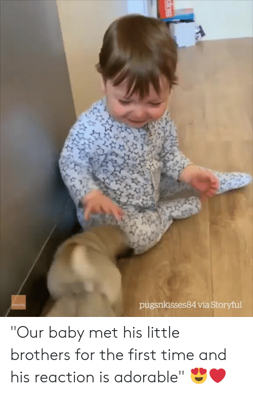 """Time, Adorable, and Baby: pugsnkisses84 via Storyful """"Our baby met his little brothers for the first time and his reaction is adorable"""" 😍❤️"""