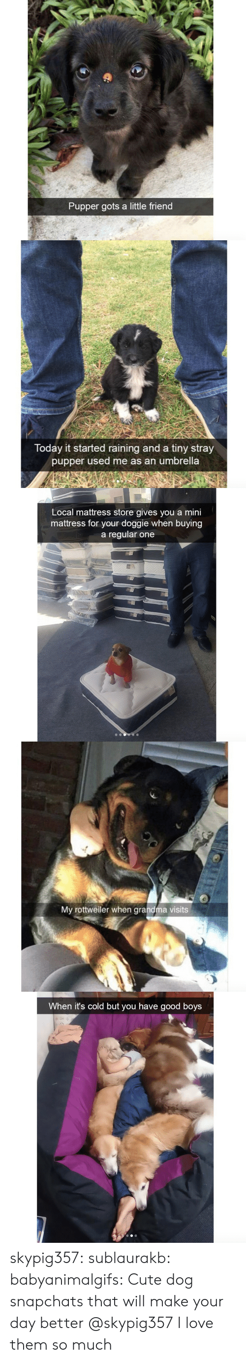 gots: Pupper gots a little friend   Today it started raining and a tiny stray  pupper used me as an umbrella   Local mattress store gives you a mini  mattress for your doggie when buying  a regular one   My rottweiler when grandma visits   When it's cold but you have good boys skypig357: sublaurakb:   babyanimalgifs:  Cute dog snapchats that will make your day better  @skypig357    I love them so much
