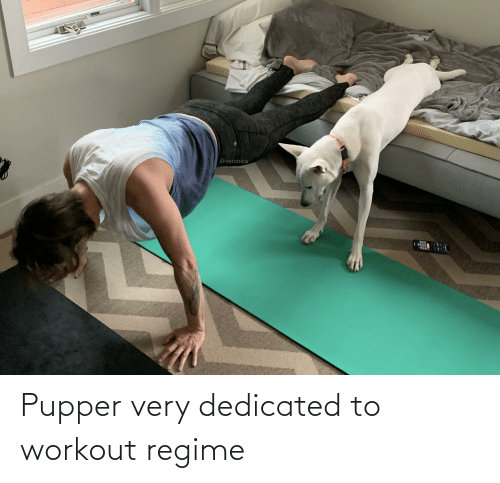 dedicated: Pupper very dedicated to workout regime