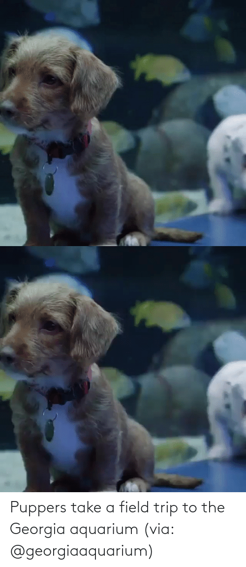 Instagram: Puppers take a field trip to the Georgia aquarium (via: @georgiaaquarium)