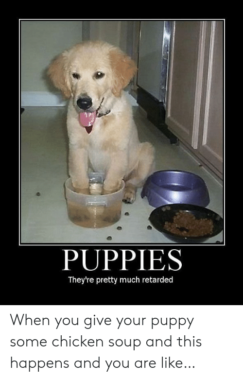 Puppies, Retarded, and Chicken: PUPPIES  They're pretty much retarded When you give your puppy some chicken soup and this happens and you are like…