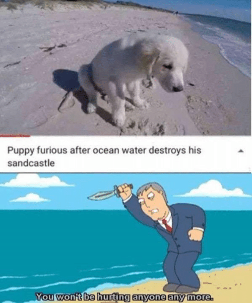 Memes, Ocean, and Puppy: Puppy furious after ocean water destroys his  sandcastle  You won't be hurting anyone any more