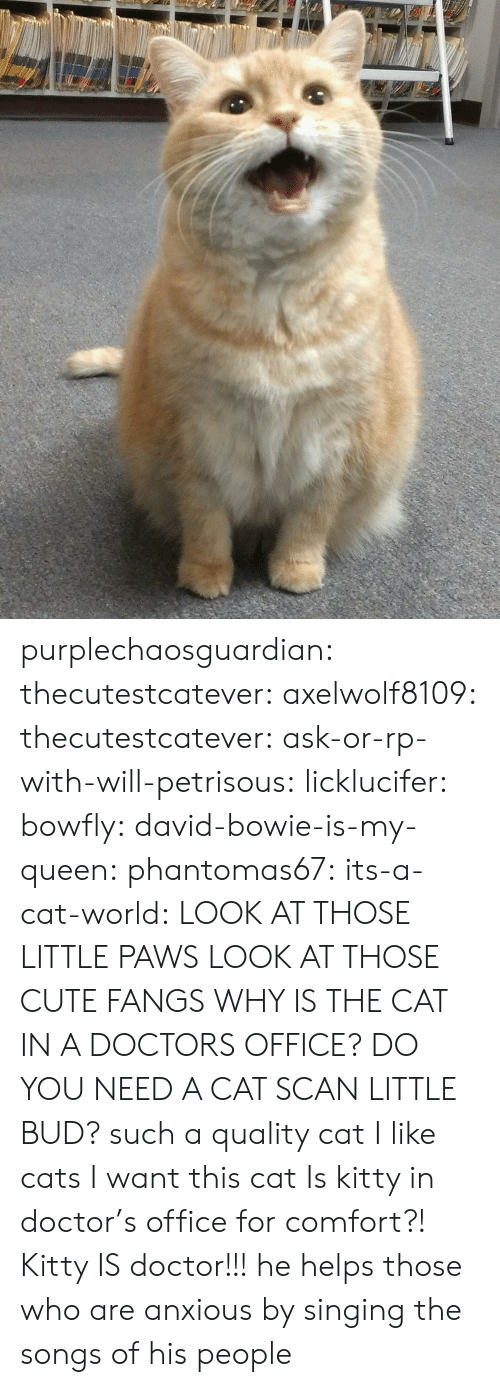 Singing: purplechaosguardian: thecutestcatever:  axelwolf8109:   thecutestcatever:   ask-or-rp-with-will-petrisous:  licklucifer:  bowfly:  david-bowie-is-my-queen:  phantomas67:  its-a-cat-world:  LOOK AT THOSE LITTLE PAWS  LOOK AT THOSE CUTE FANGS  WHY IS THE CAT IN A DOCTORS OFFICE?  DO YOU NEED A CAT SCAN LITTLE BUD?  such a quality cat  I like cats  I want this cat    Is kitty in doctor's office for comfort?!   Kitty IS doctor!!!  he helps those who are anxious by singing the songs of his people