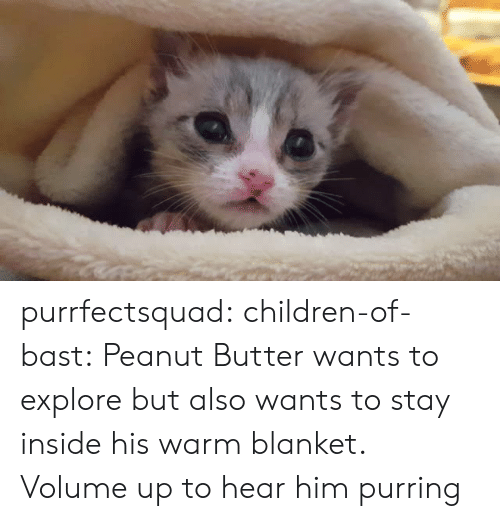 Volume Up: purrfectsquad: children-of-bast: Peanut Butter wants to explore but also wants to stay inside his warm blanket. Volume up to hear him purring