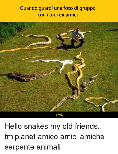 Friends, Hello, and Memes: Quando guardi una foto di gruppo  con i tuoi ex amici  TML Hello snakes my old friends... tmlplanet amico amici amiche serpente animali