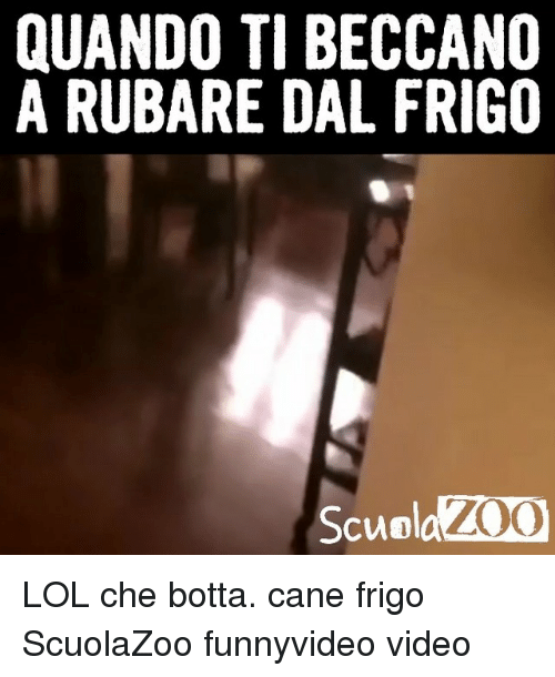 Lol, Memes, and Video: QUANDO TI BECCANO  A RUBARE DAL FRIGO  ScuolaZOC LOL che botta. cane frigo ScuolaZoo funnyvideo video
