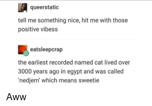 Aww, Egypt, and Nice: queerstatio  tell me something nice, hit me with those  positive vibess  eatsleepcrap  the earliest recorded named cat lived over  3000 years ago in egypt and was called  'nedjem which means sweetie Aww