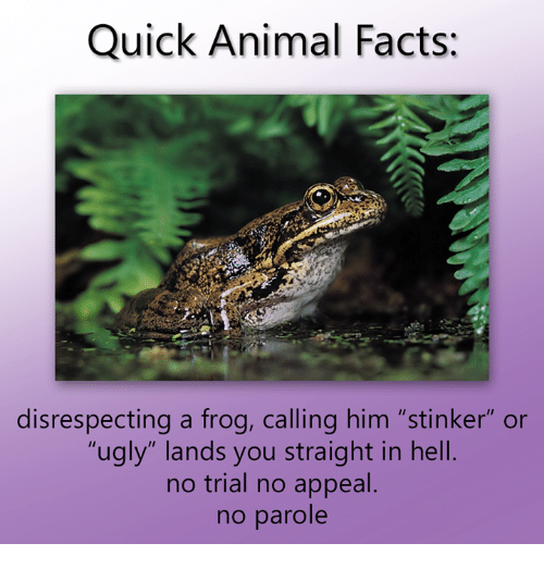 "Dank, Facts, and Ugly: Quick Animal Facts:  disrespecting a frog, calling him ""stinker"" or  ""ugly"" lands you straight in hell  no trial no appeal  no parole"