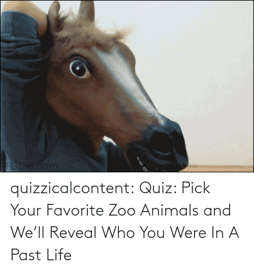 Animals: quizzicalcontent:    Quiz: Pick Your Favorite Zoo Animals and We'll Reveal Who You Were In A Past Life