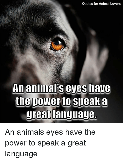Quotes For Animal Lovers An Animal S Eves Have The Nower To Sneak A