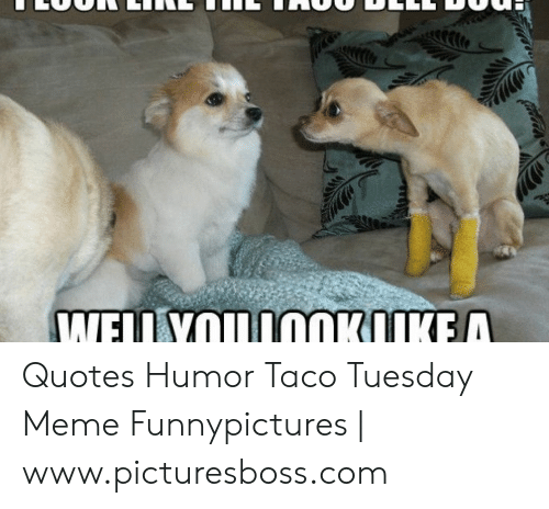 Taco Tuesday Meme: Quotes Humor Taco Tuesday Meme Funnypictures | www.picturesboss.com