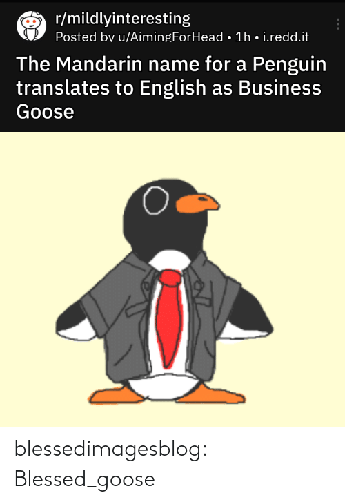 Business: r/mildlyinteresting  Posted bv u/AimingForHead • 1h • i.redd.it  The Mandarin name for a Penguin  translates to English as Business  Goose blessedimagesblog:  Blessed_goose