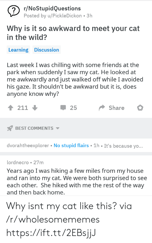 Friends, My House, and Saw: r/NoStupidQuestions  Posted by u/PickleDickon 3h  Why is it so awkward to meet your cat  in the wild?  Learning Discussion  Last week I was chilling with some friends at the  park when suddenly I saw my cat. He looked at  me awkwardly and just walked off while I avoided  his gaze. It shouldn't be awkward but it is, does  anvone know whv?  1 211  25  Share  BEST COMMENTS  dvorahtheexplorer No stupid flairs 1h It's because yo  lordnecro 27m  Years ago I was hiking a few miles from my house  and ran into my cat. We were both surprised to see  each other. She hiked with me the rest of the way  and then back home Why isnt my cat like this? via /r/wholesomememes https://ift.tt/2EBsjjJ