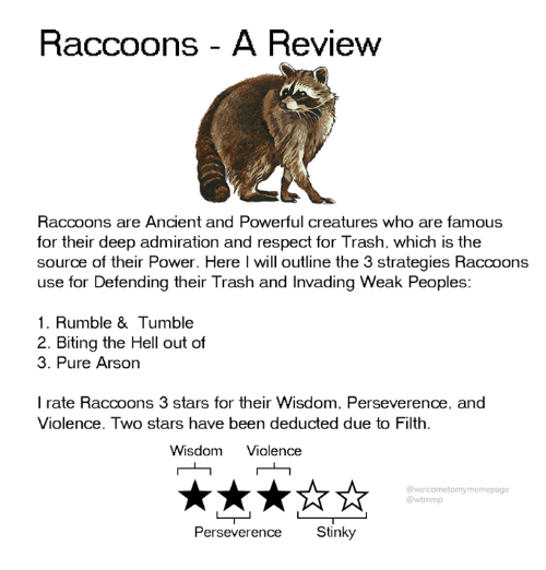 arson: Raccoons - A Review  Raccoons are Ancient and Powerful creatures who are famous  for their deep admiration and respect for Trash. which is the  source of their Power. Here l will outline the 3 strategies Raccoons  use for Defending their Trash and Invading Weak Peoples:  1. Rumble & Tumble  2. Biting the Hell out of  3. Pure Arson  I rate Raccoons 3 stars for their Wisdom. Perseverence, and  Violence. Two stars have been deducted due to Filth.  Wisdom Violence  @welcometomymemepage  @wtmmp  Perseverence Stinky