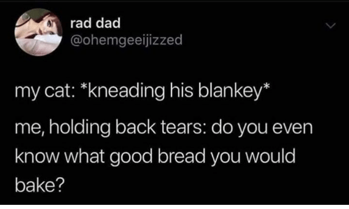 Dad, Memes, and Good: rad dad  @ohemgeeijizzed  my cat: *kneading his blankey*  me, holding back tears: do you even  know what good bread you would  bake?