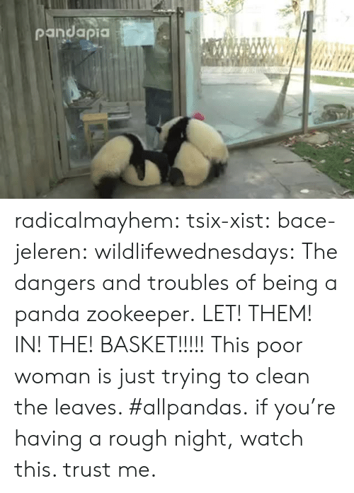 Facebook, Tumblr, and Videos: radicalmayhem: tsix-xist:  bace-jeleren:  wildlifewednesdays:  The dangers and troubles of being a panda zookeeper.  LET! THEM! IN! THE! BASKET!!!!!  This poor woman is just trying to clean the leaves. #allpandas.  if you're having a rough night, watch this. trust me.