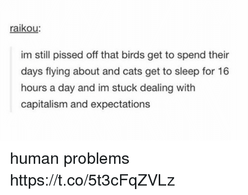 humanism: raikou  im still pissed off that birds get to spend their  days flying about and cats get to sleep for 16  hours a day and im stuck dealing with  capitalism and expectations human problems https://t.co/5t3cFqZVLz
