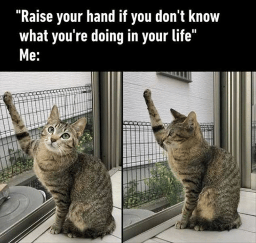 """Life, You, and What: """"Raise your hand if you don't know  what you're doing in your life""""  Me:"""